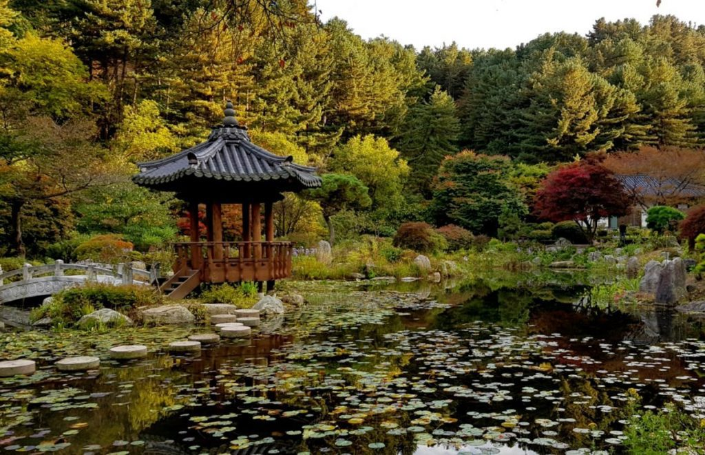 Beautiful Pond Views in The Garden of Morning Calm