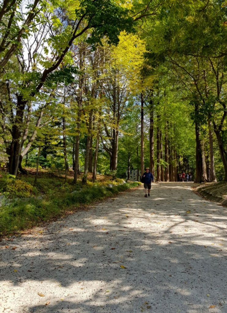 Walking along pleasant forested pathways on Nami Island